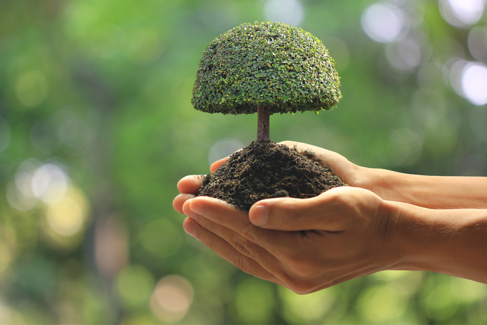 A stereotypical image of hands holding a mini tree.